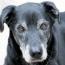 Loving & Losing a Senior Dog