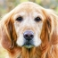 Pet Talk: How To Prepare For Your Pet's Death