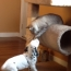 Puppy Plays With Cat for the First Time