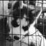 puppymill_sm.jpg