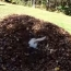 Dog Jumps into Pile of Leaves