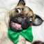Dogs That Are Ready For St. Patrick's Day