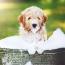 How often to bathe puppy