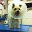 Jules the dog at the vet, photo by keatssycamore via Flickr