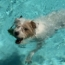 15 Dogs Enjoying The Pool Weather