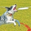5 Fun Sports for Dogs