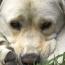 How Dogs Grieve