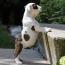 dog climbing stairs