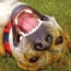 8 Reasons You Should Get Your Dog's Teeth Cleaned