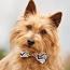 The Australian Terrier