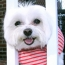 Puppy Bumpers, Inc. Announces Annual Holiday Line of Puppy Bumpers®