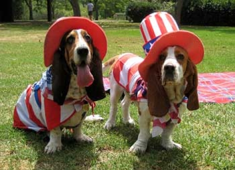 4th-of-july-dog-costume.jpg