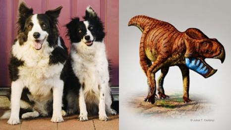 DinoDogs.jpg