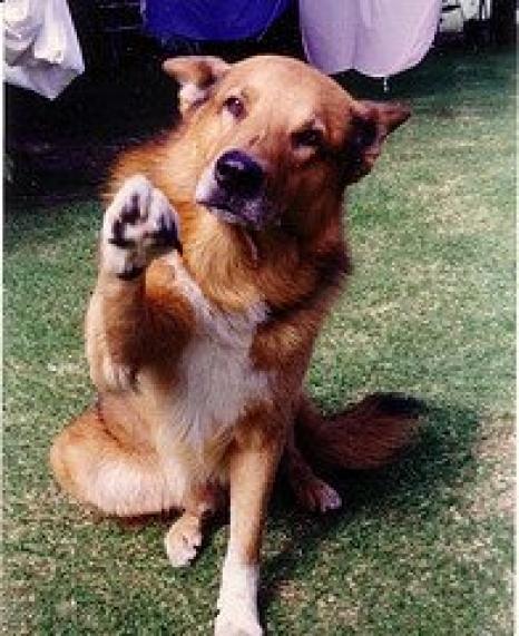 DogPawShake-774327.jpg