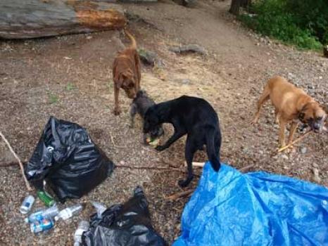 Dogs-camp-1.jpg