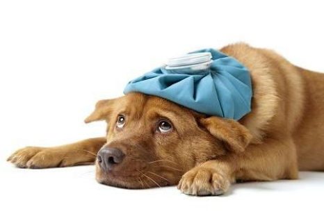 Colleen is sick as a dog | Modern Dog magazine