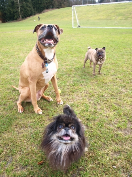Trio at park.JPG