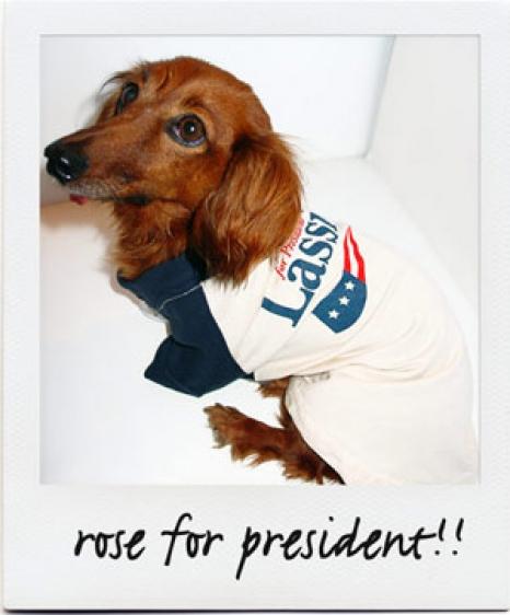 db_rose_president.jpg