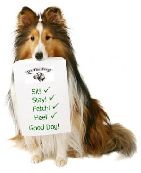 dog-check-list.jpg