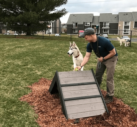 Gyms for Dogs ramp