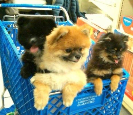 pom shopping cart2.jpg