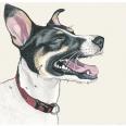 Custom pet portrait from Art by Manda