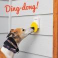 Doggie doorbell from Pebble Smart