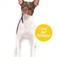 The Rat Terrier (Terrier Group)