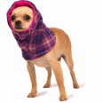 Cute, cozy snood for dogs in the winter, cozy dog clothing to keep your dog warm