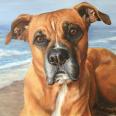 Lisa Bane Art pet portrait of dog at the beach