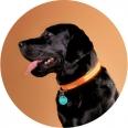 Poochlight Light Up Flashing Dog Collar