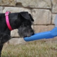 Gulpy Water Dispenser for Dogs