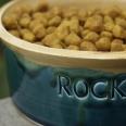 Custom Ceramic Dog Bowl