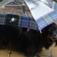 umbrellateaser.jpg