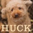 CBC-HuckCOVER-sm.jpg