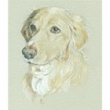 Pet Portraits by Lara Tomlin
