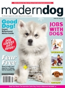Modern Dog Winter 19/20