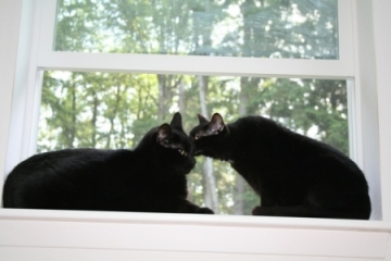 IMG_2445_black_cats_shrunk.jpg