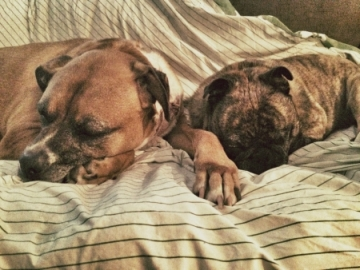 SleepingDogs.jpg