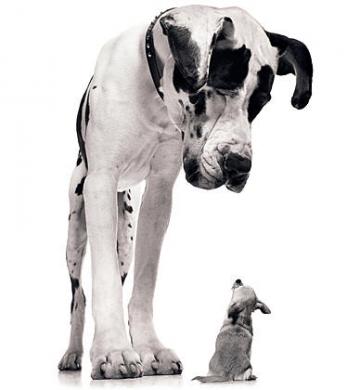big_dog_little_dog.jpg