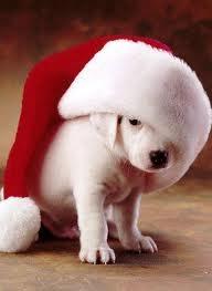christmas pooch.jpg