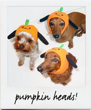 db_all_pumpkin.jpg