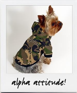 db_big_alpha.jpg