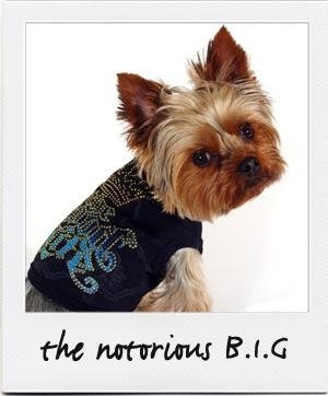 db_big_notorious.jpg