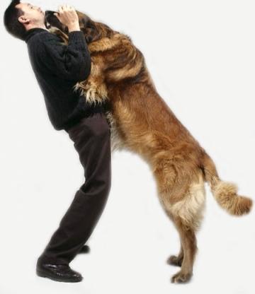 dog jumping.jpg