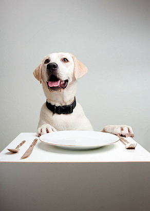 dog-eating.png