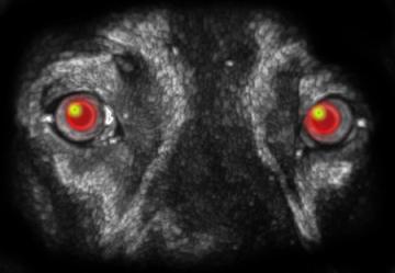 ghost dog pic.jpg