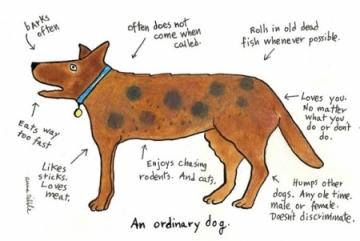 ordinarydog.jpg