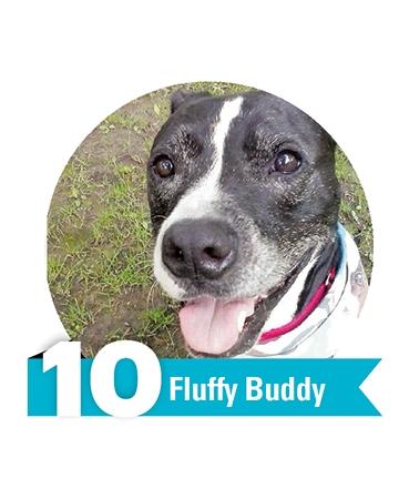#10 Fluffy Buddy