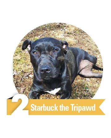 #2 Starbuck the Tripawd